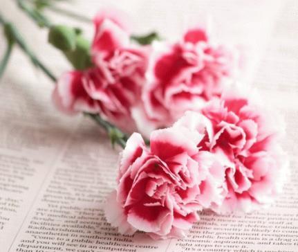 carnation_s.jpg